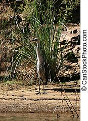 Bird - Ormiston Gorge, Australia