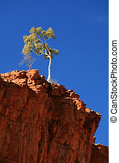 Lone Tree - Ormiston Gorge, Australia