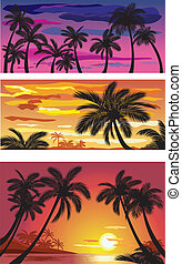 Landscapes with palms at sunset