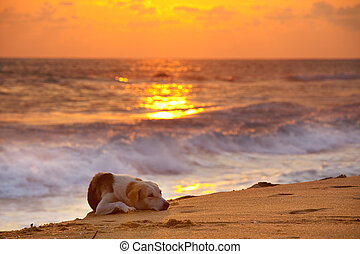 Dog on beach - dog on beach at sunset