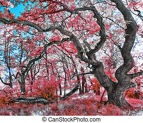 A beautiful image of Royal Poinciana - Beautiful infrared...