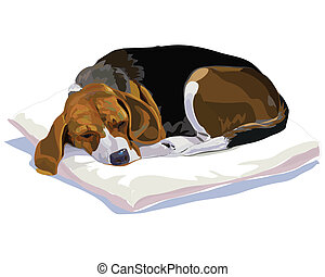 Sleeping Beagle - My belove beagle is sleeping after...
