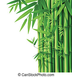 Bamboo,vector illustration