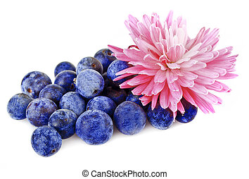a handful of blueberries