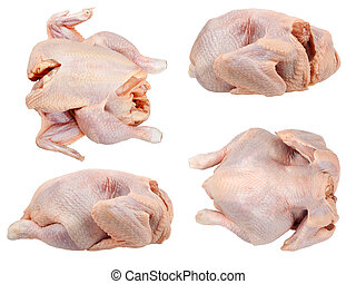 whole hen - The whole hen close up isolated on a white...