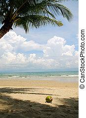 Coconut2 - The big coconut on the sand beach