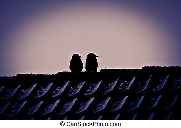 Winter reconnaissance - Two freeze jackdaws watching the new...