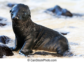 Baby Sea Lion - This adorable Baby Sea Lion is playing on...