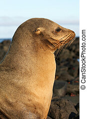 Beautiful Sea Lion - A beautiful Sea Lion watching the...