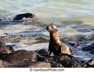 Baby Sea Lion - This baby Sea Lion was caught enjoying...