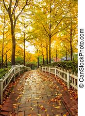 Autumn - Romantic Autumn Season