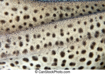 Zebra shark  - Skin texture of the zebra shark
