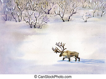 Deer in the snow - beautiful deer in the snow in winter...
