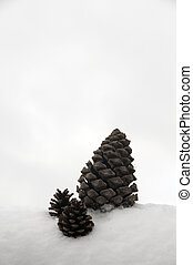 pinecone in winter