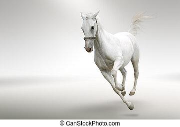 動き, 白, 馬