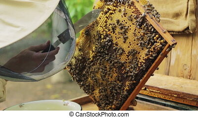 Beekeeper working with honeycombs
