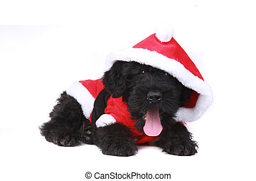 Cute Black Russian Terrier Puppy Dog as Santa on White...