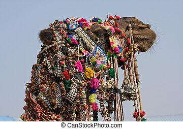 camelo, Pushkar, feira, (, Pushkar, camelo, Mela, ),...