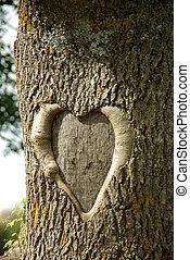 heart - tree