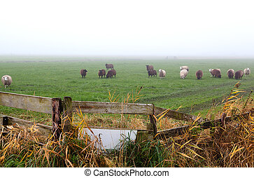 wooden fence on pasture with sheep