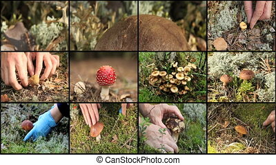 mushrooms and berries montage - mushrooms and berries in the...