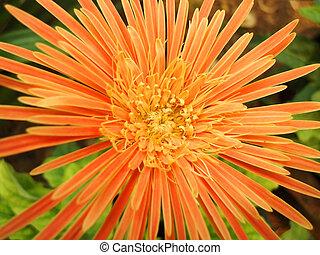 Fresh Flower in the garden