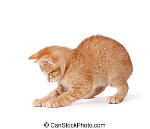 Cute kitten playing on a white ba - Cute orange kitten with...