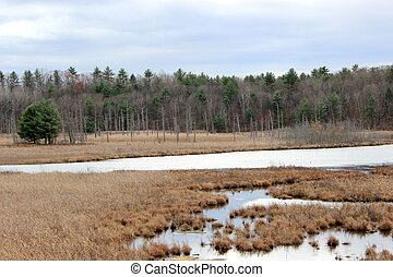 Salt marsh with trees and gray sky - Scene of salt marsh...