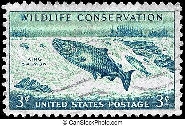 USA - CIRCA 1956 King Salmon