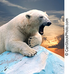 polar bear against sunset - polar bear in wildness area...