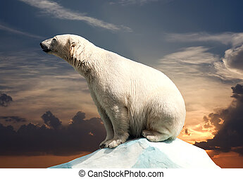 polar bear in wildness area against sunset
