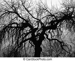 Scary Tree - A large, scary looking tree shot in black and...
