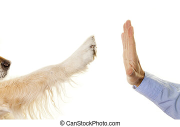 High Five - Handshake between a person and their pet