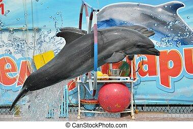 The  dolphinarium in Anapa
