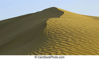 Sand dune - Scarab crowling on the sand dune in the Thar...