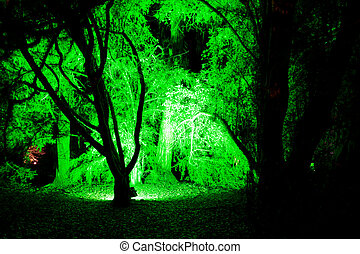 Green forest clearing, at Enchanted Christmas, Westonbirt,...