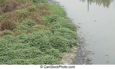 Shore plants & Pollution rivers.