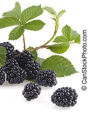 Wonderful blackberries. - Blackberries with branch isolated...