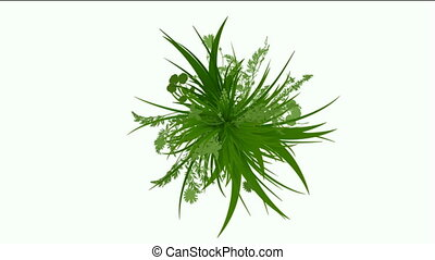 flower and plant growing silhouette - flower plant growing...