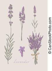 淡紫色, 手, 畫, 集合, 矢量