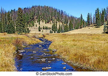 West Fork Black River - Trout stream - West Fork of the...