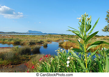 The pond of San Teodoro - Sardinia - Italy - 589