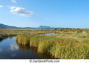The pond of San Teodoro - Sardinia - Italy - 581
