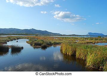 The pond of San Teodoro - Sardinia - Italy - 579