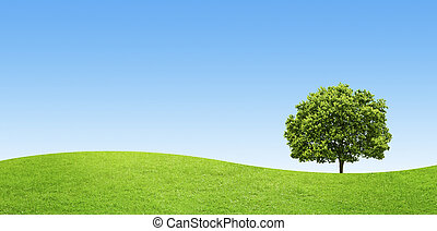 panorama of green field with a big tree on blue sky background