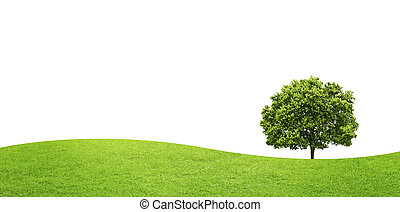 panorama of green field with a big tree on white background