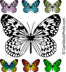 Butterfly vector template with samples