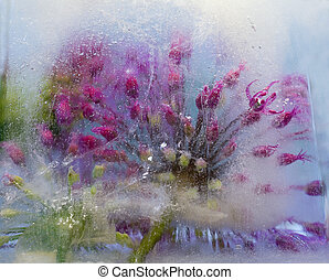 Frozen flower of allium - Frozen beautiful flower of allium....