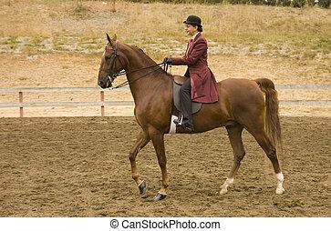 Saddlebred horse - image of a saddlebred horse in English...