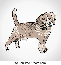 Beagle Dog - Cute pet animal as studio shot isolated on...